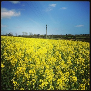 Stopped off at this Rapeseed Field for a quick photo shoot!