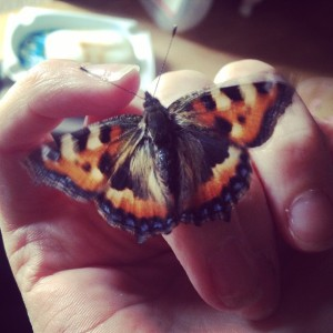 Flutter-By